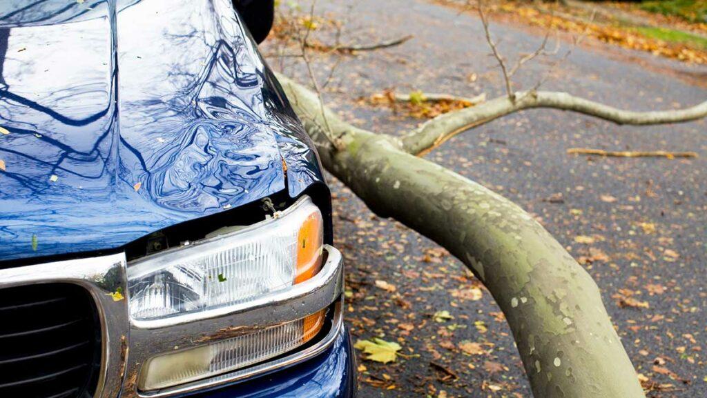 Car damaged by limb - Comprehensive Car Insurance
